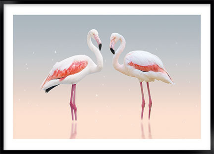 Plakat - White flamingo no1