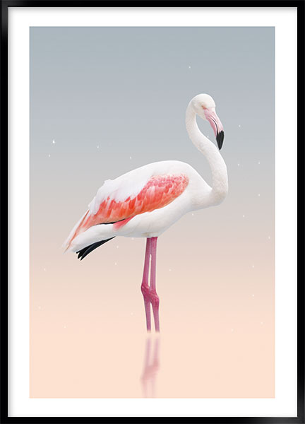Plakat - White flamingo no2