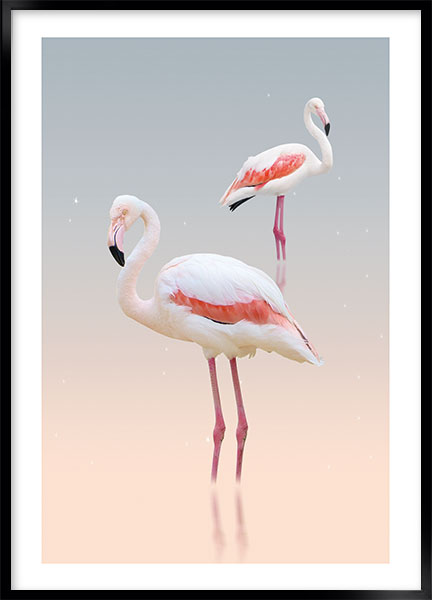 Plakat - White flamingo no3