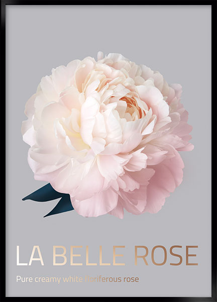 Plakat - Belle rose no4