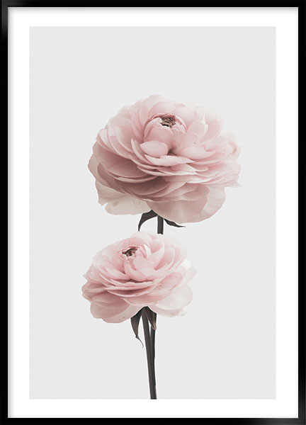 Plakat - Pink rose no3