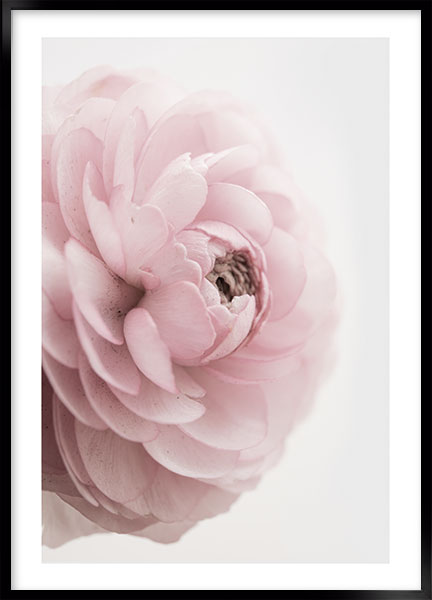 Plakat - Pink rose no4