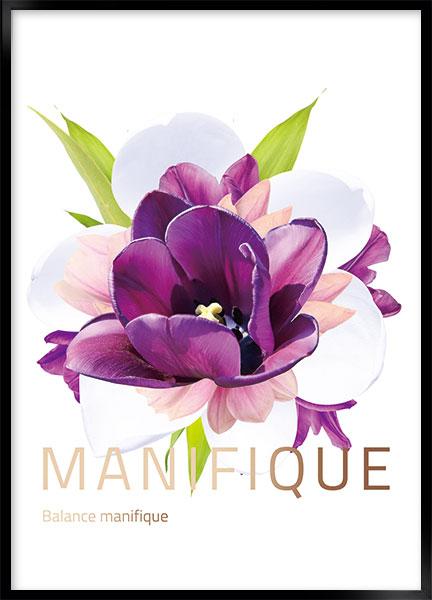 manifique thumbnail