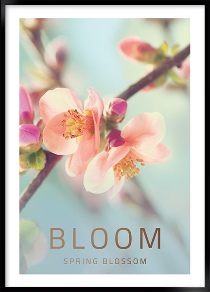Plakat - Bloom