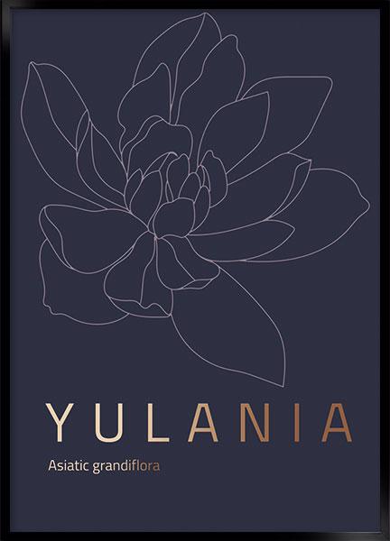 yulania thumbnail